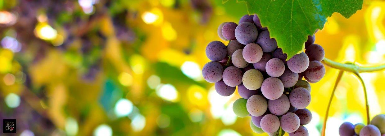 Bordeaux' druer