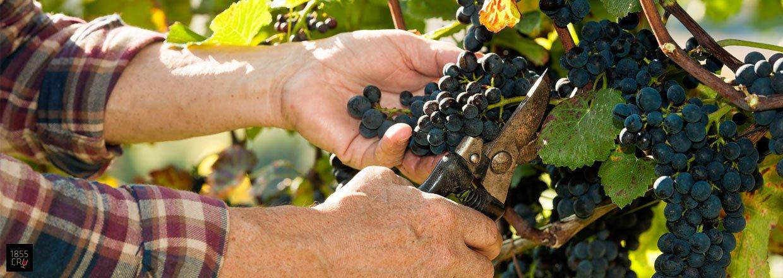Bordeaux' produktion i tal